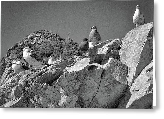 Greeting Card featuring the photograph Gulls On Guard - Pt Mugu, California by Samuel M Purvis III