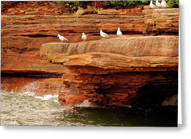 Gulls On Outcropping Greeting Card