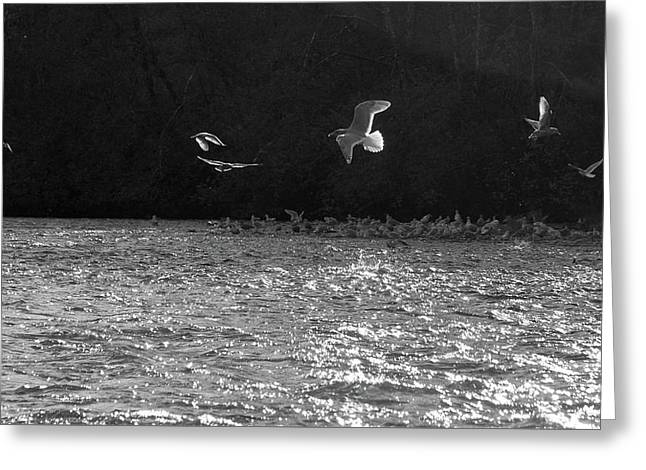 Gulls On The River Greeting Card