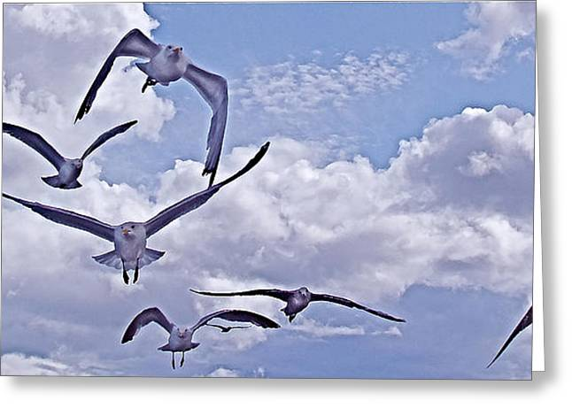 Gulls Will Be Gulls Greeting Card by Mike Shepley DA Edin