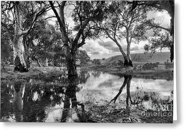 Greeting Card featuring the photograph Gum Creek by Douglas Barnard