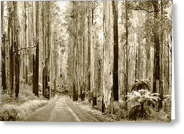 Gum Forest Sepia Greeting Card by Sean Davey