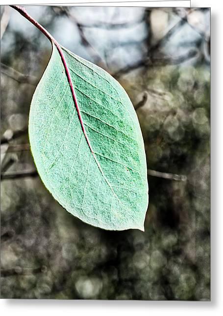 Gum Leaf - Australia  Greeting Card by Steven Ralser