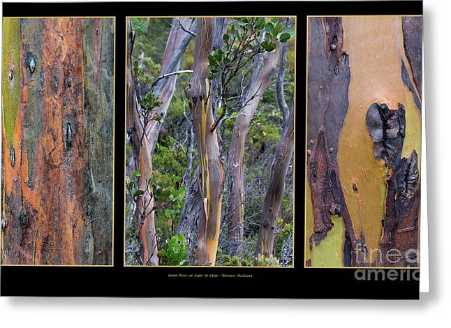 Gum Trees At Lake St Clair Greeting Card by Werner Padarin