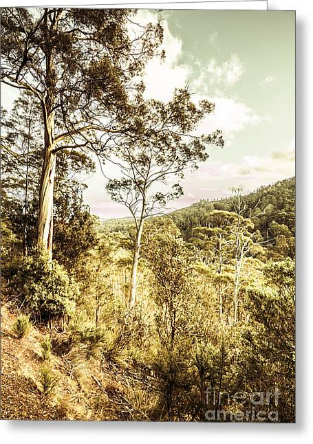 Gumtree Bushland Greeting Card by Jorgo Photography - Wall Art Gallery