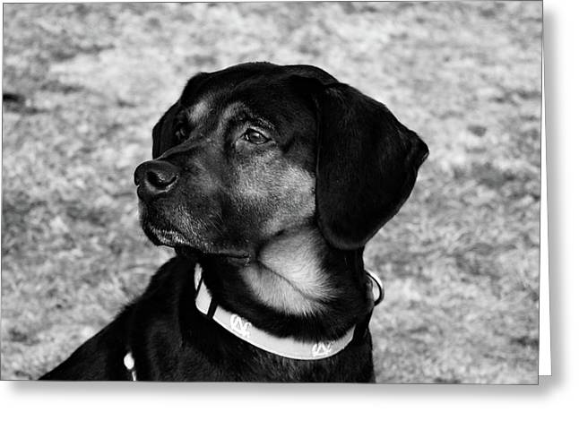 Gus - Black And White Greeting Card