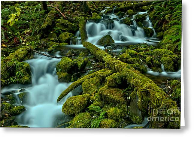 Gushing Through The Moss Covered Rainforest Greeting Card by Adam Jewell