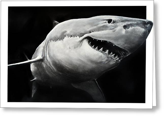 Gw Shark Greeting Card