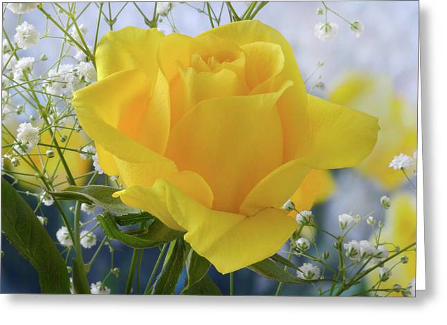 Greeting Card featuring the photograph Gypsophila And The Rose. by Terence Davis