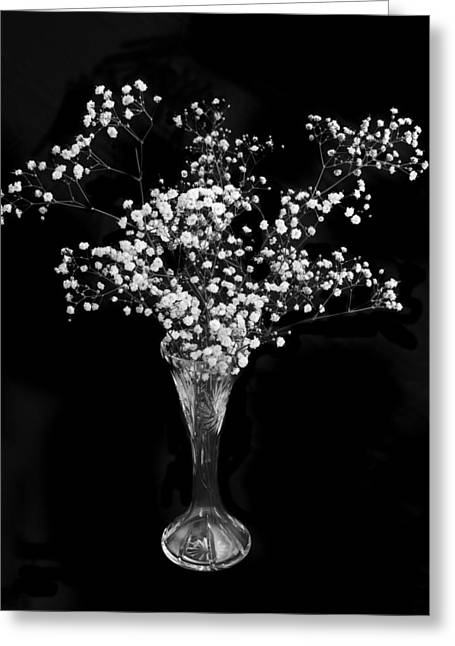 Gypsophila Black And White Greeting Card by Terence Davis