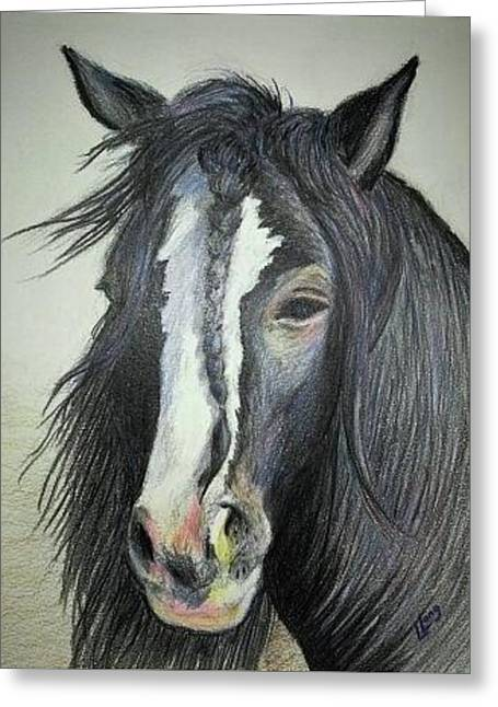 Gypsy Vanner Stallion Greeting Card by Lillian Long
