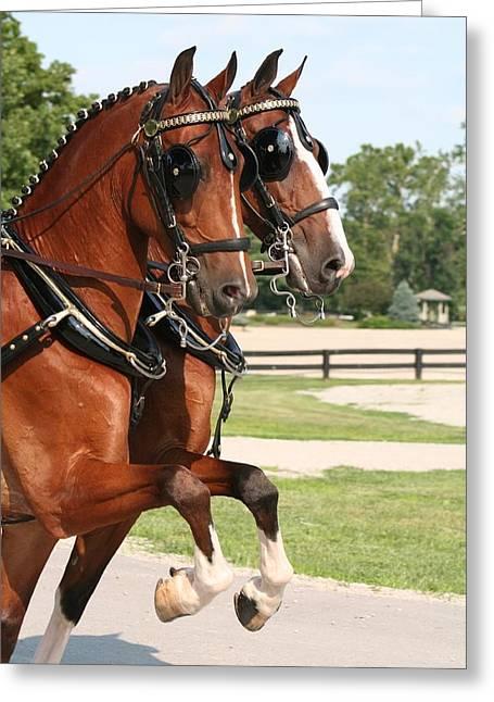 Hackney Horse Pair Greeting Card by Amanda Bassett