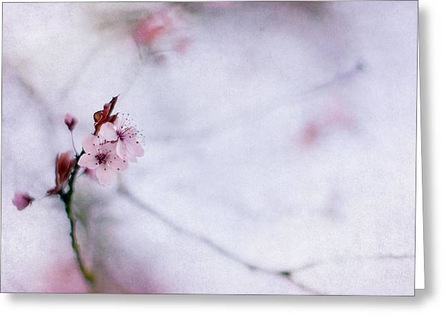 Cherry Blossoms Photographs Greeting Cards - Haiku Two Greeting Card by Rebecca Cozart