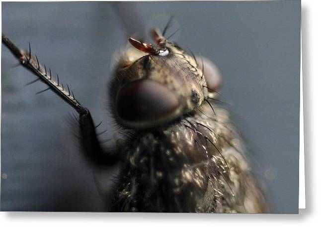 Greeting Card featuring the photograph Hair On A Fly by Glenn Gordon
