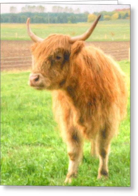 Hairy Coos Greeting Card
