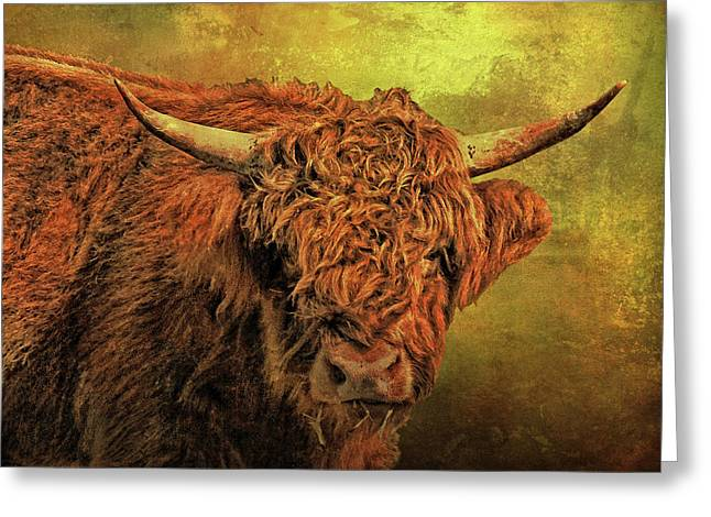 Hairy Highland Beastie Greeting Card by HH Photography of Florida
