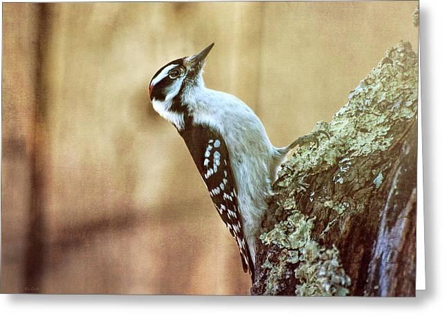 Hairy Woodpecker Greeting Card by Bob Orsillo