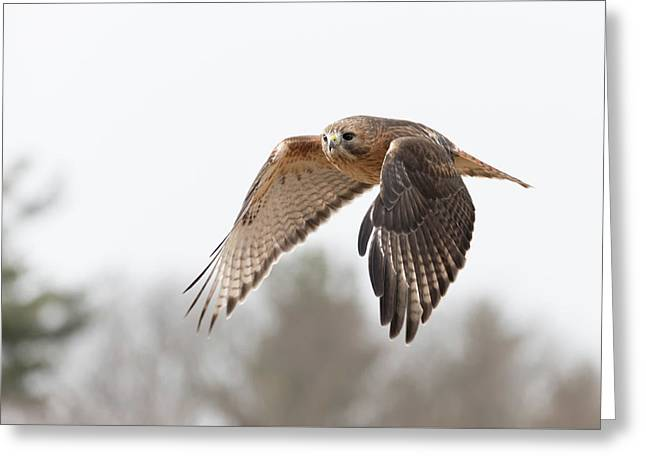 Hal Takes Flight Greeting Card
