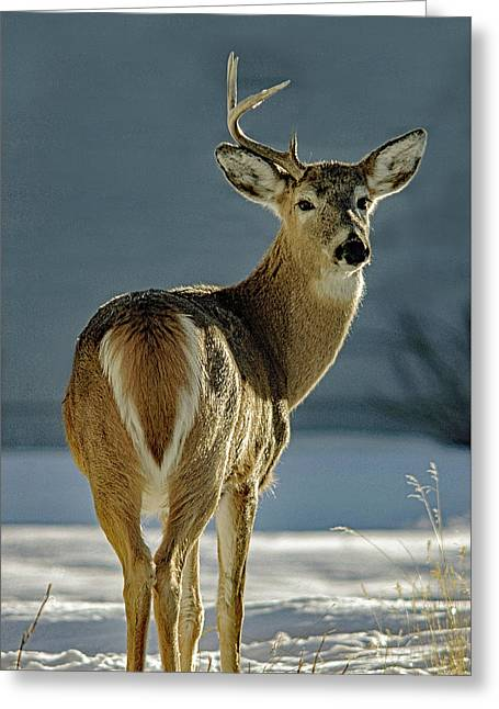 Half A Buck Greeting Card
