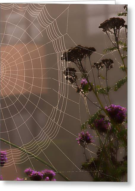 Half A Web Greeting Card
