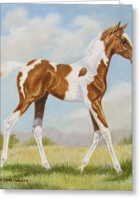 Half Arabian Pinto Filly Greeting Card
