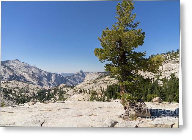 Half Dome And Yosemite Valley From Olmsted Point Tioga Pass Yosemite California Dsc04274 Greeting Card by Wingsdomain Art and Photography