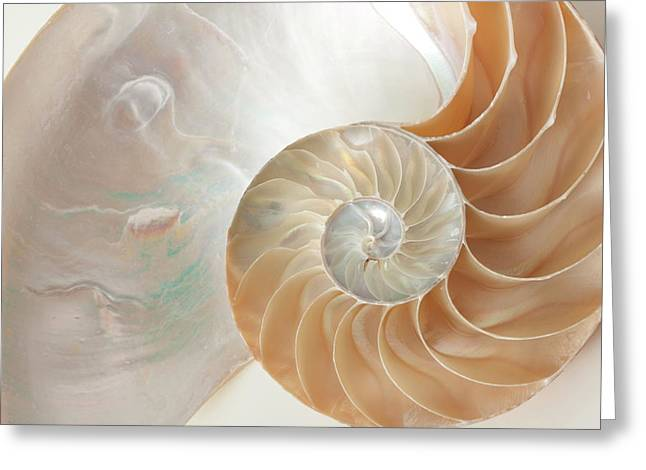 Greeting Card featuring the photograph Half  Shell Nautilus by John Hix