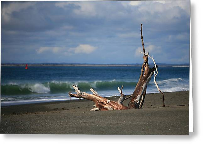 Halfmoon Bay Driftwood Greeting Card by Mike Coverdale