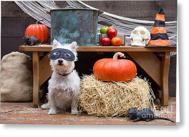 Halloween Party Dog Greeting Card by Edward Fielding
