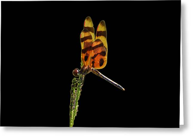 Greeting Card featuring the photograph Halloween Pennant Dragonfly .png by Al Powell Photography USA