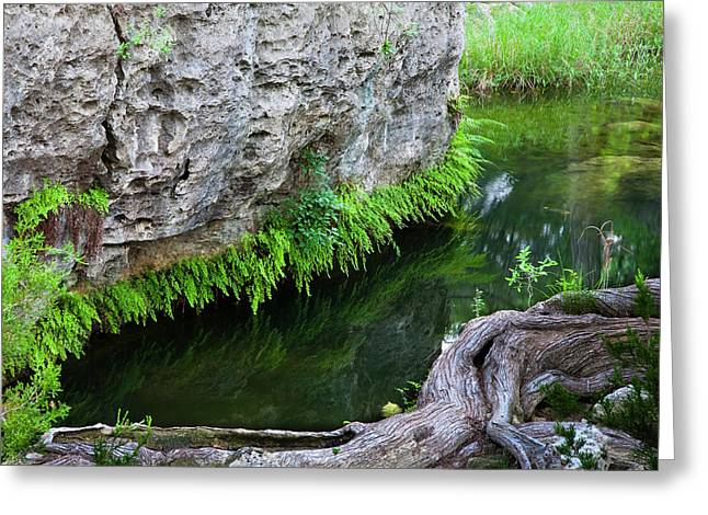Hamilton Pool Preserve Greeting Card by Mark Weaver