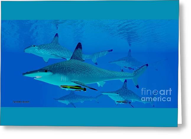 Hammerhead Sharks Greeting Card by Corey Ford