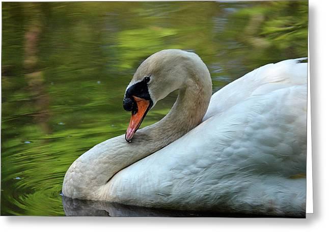 Hammy Swan Greeting Card