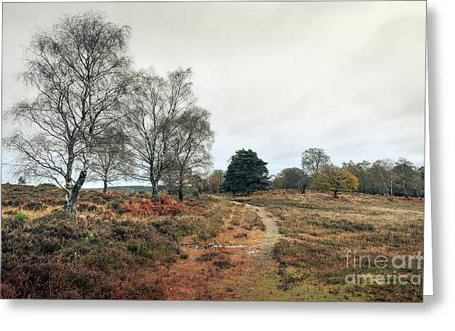 Hampshire Landscape Greeting Card by Svetlana Sewell