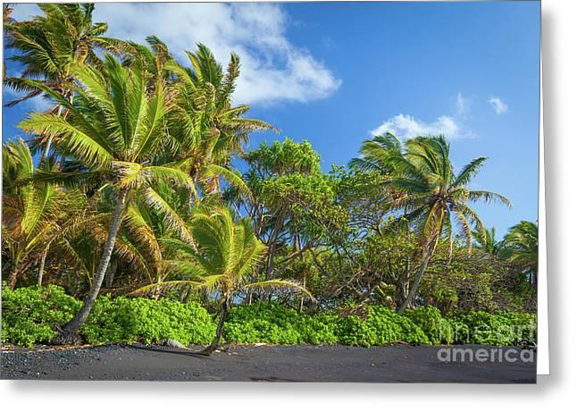 Hana Palm Tree Grove Greeting Card by Inge Johnsson