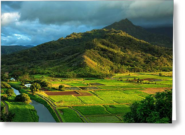 Hanalei Valley Taro Fields Greeting Card