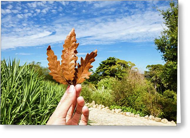 Hand Holding A Beautiful Oak Leaf Greeting Card
