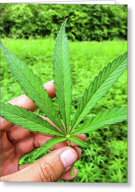 Hand Holding A Hemp Leaf Greeting Card