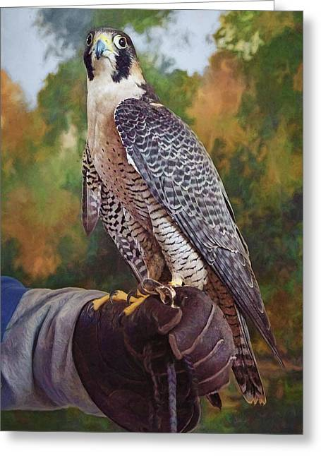 Greeting Card featuring the photograph Hand Of The Falconer by Nikolyn McDonald