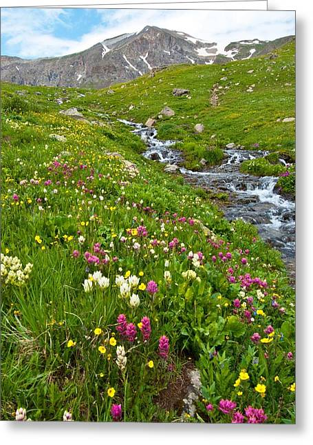 Greeting Card featuring the photograph Handie's Peak And Alpine Meadow by Cascade Colors
