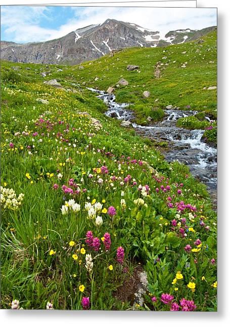 Handie's Peak And Alpine Meadow Greeting Card