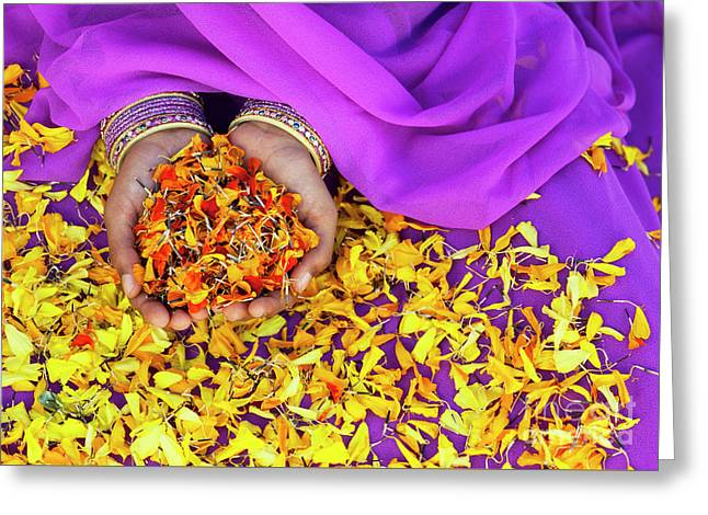 Hands Holding Marigold Petals Greeting Card by Tim Gainey
