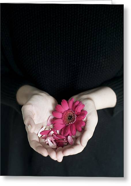 Hands Holding Pink Gerbera Daisies Greeting Card