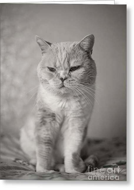 Greeting Card featuring the photograph Handsome Cat by Aiolos Greek Collections