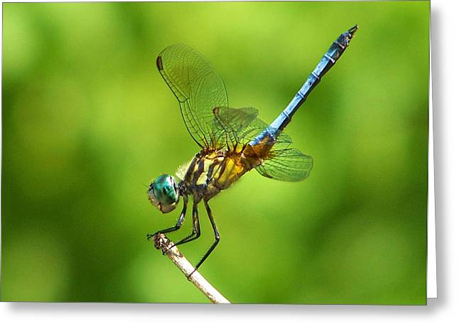 Handstand Dragonfly Greeting Card by Karen M Scovill