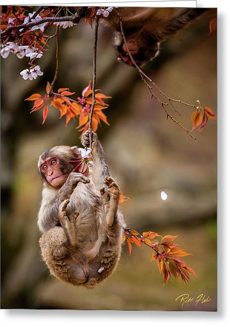 Greeting Card featuring the photograph Hang In There, Baby Redux by Rikk Flohr