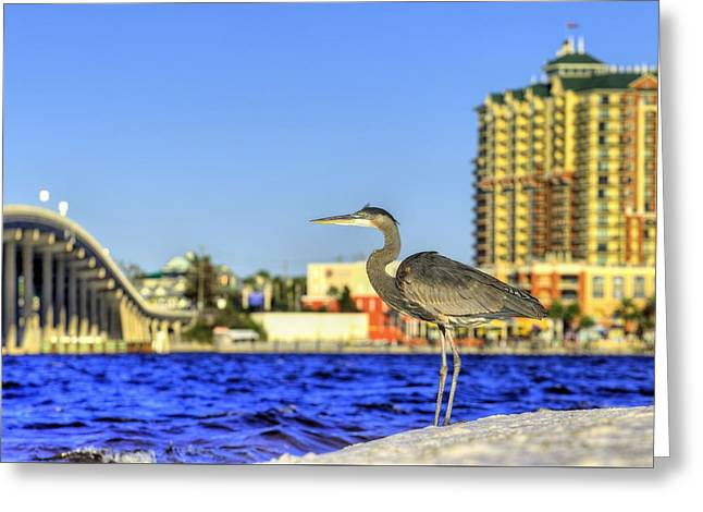 Hang With The Locals In Destin Greeting Card by JC Findley