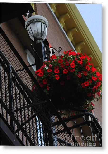 Hanging Basket Greeting Card by Kathleen Struckle