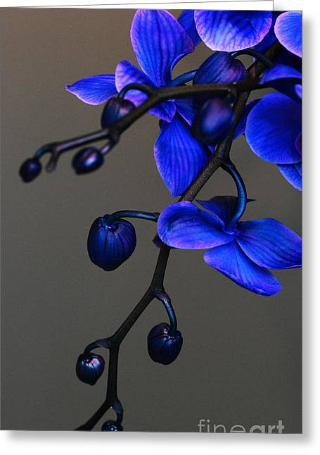 Hanging Blue Moth Orchids Greeting Card