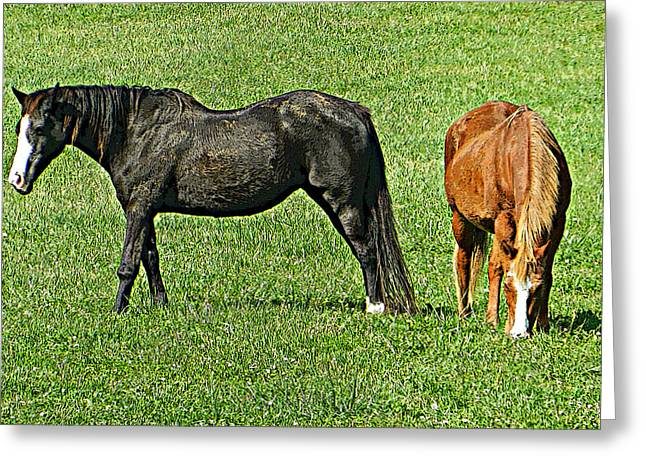 Hanging Out In The Pasture - Sugarloaf Mountain Greeting Card by Emmy Marie Vickers